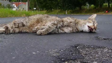 3d roadkill dog roadkill definition meaning