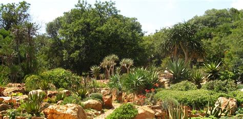 Botanical Gardens Pretoria Things You Didn T About Pretoria Running Wolf S Rant