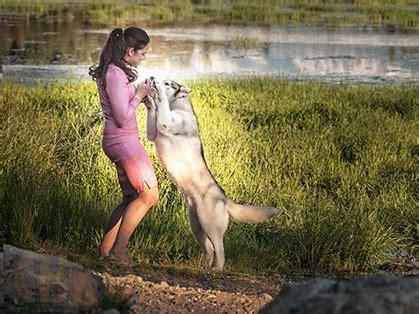 rottweiler club of alaska working club of alaska sunday september 4 2016 canine chronicle
