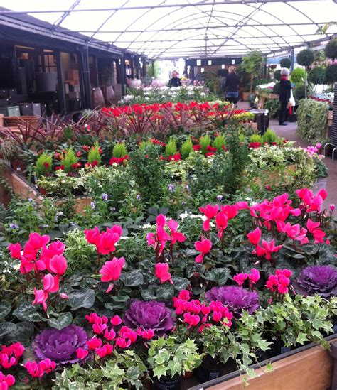 bedding plants bedding plants the chelsea gardener