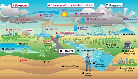 How To Detox From Plouted Air by Detox Solution Toxic And Chemicals Effects Our
