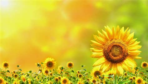 imagenes para fondos de pantalla flores imagenes fotograficas imagenes bonitas de flores para