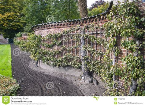 apple trees on the wall stock image image 27220111