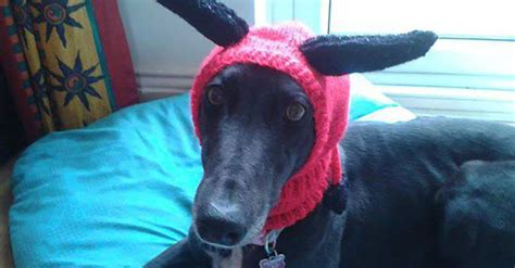 greyhound knitted hat pattern a is knitting woolly hats to help
