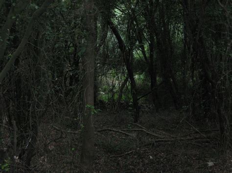 imagenes de paisajes oscuros goticos im 225 genes de bosques y paisajes tenebrosos taringa