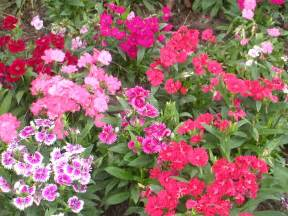 file flower garden unknown plant 2 jpg wikipedia