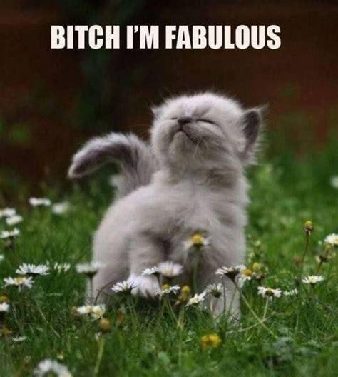 Bitch Im Fabulous Meme - bitch im fabulous funny cat meme http jokideo com