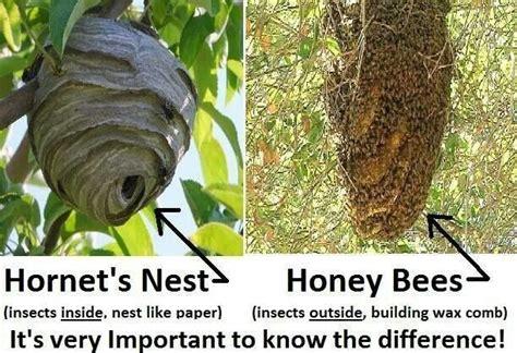 Garden Hose Vs Wasp Nest Hornet Nest Vs Bee Hive Bees Bee Hives