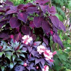 Best Flowers For Shade Gardens What To Plant In The Shade Sunset