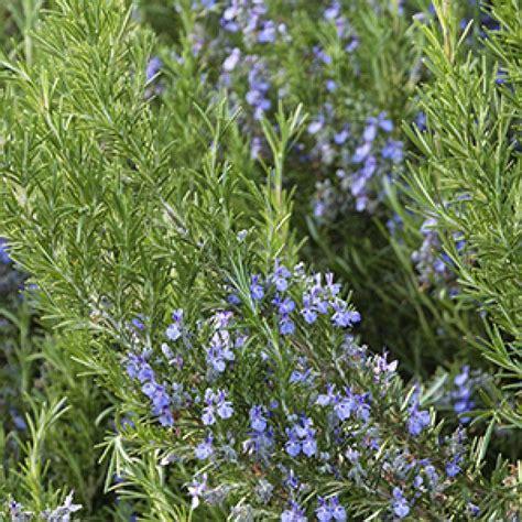 shrubs  attract pollinators southwest grow