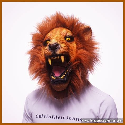 ver imagenes sorprendentes de animales imagenes de animales salvajes archivos imagenes de leones