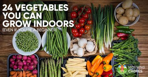 vegetables i can grow indoors 24 newbie friendly vegetables you can easily grow indoors
