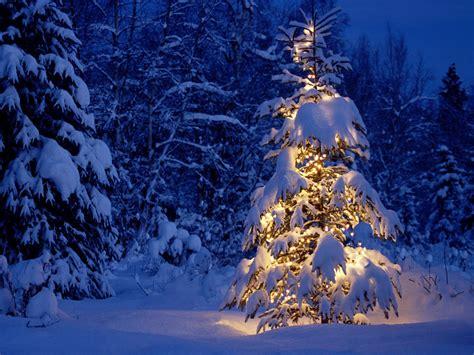 Peisaje de Craciun   Poze Craciun   Peisaj de Iarna: 29.11