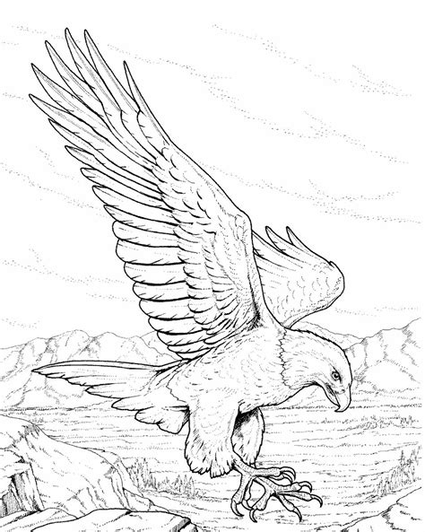 bald eagle coloring pages free free coloring pages of bald