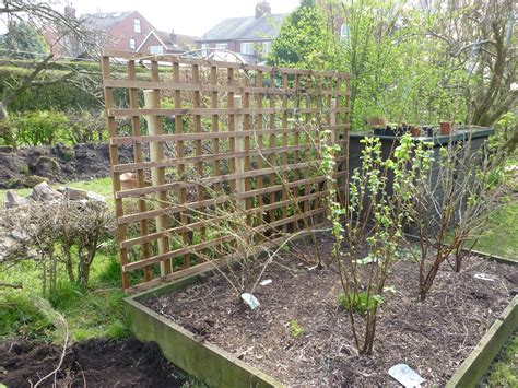 Ready Made Trellis Always Coming Home