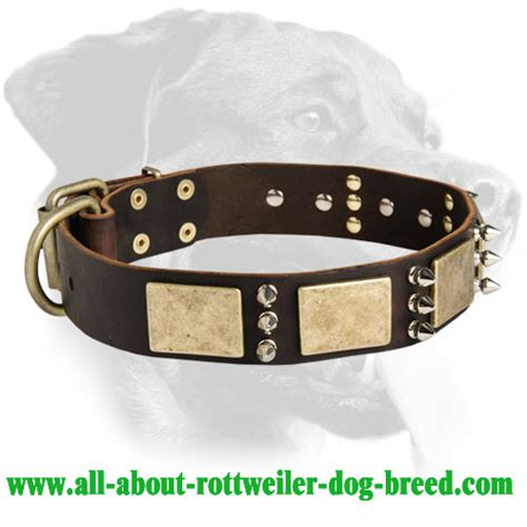 rottweiler collar buy genuine leather rottweiler collar brass nickel