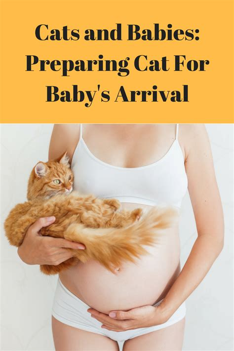 10 Ways To Prepare For A Baby by Prepare Cat For New Baby Cats