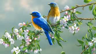 birds wallpaper sun shines colourful birds wallpaper