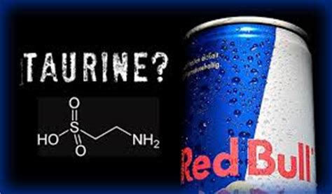 l taurine in energy drinks taurine benefits helpherself
