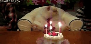 gif format birthday wishes happy birthday gif by cheezburger find share on giphy