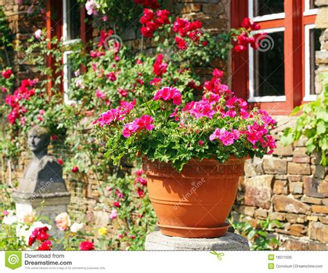 Flower Pot In Sunny Garden Stock Image Image Of Outdoors Gardens In A Flower Pot