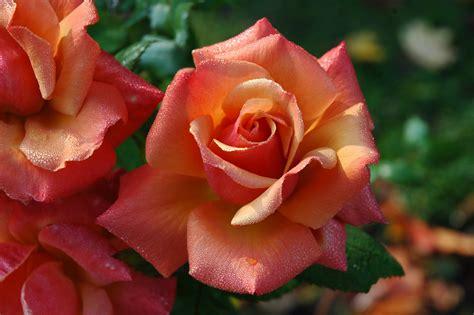 marino fiori rivoli marino fiori garden store rivoli torino news articoli