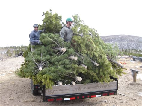 o christmas tree to charity from pingree source