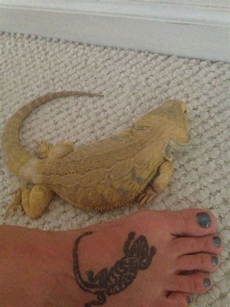 bearded dragon tattoo puff bearded lizard bearded pet
