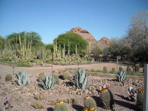 Az Botanical Garden Botanical Gardens Az Arizona
