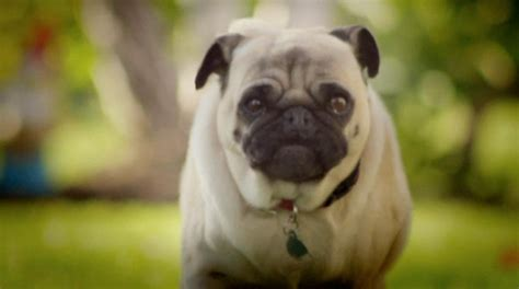 doritos commercial pug mythmakers entertainment publishing development production