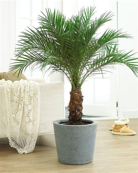 jenis tanaman  cocok  penyegar udara