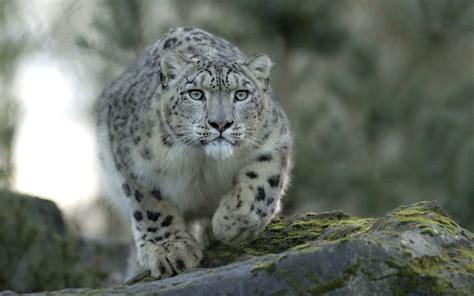 macbook pro 1 1 snow leopard snow leopard wallpaper 1206230