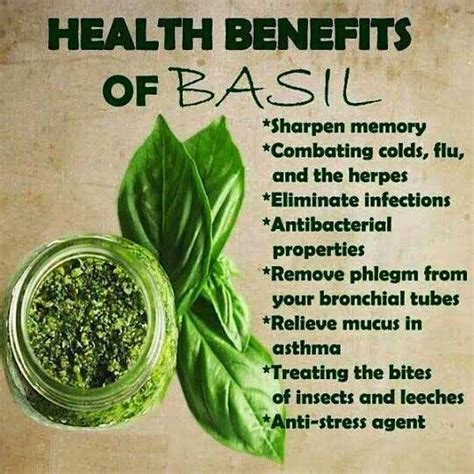 Holy Tea Detox Symptoms by 17 Best Ideas About Basil Health Benefits On
