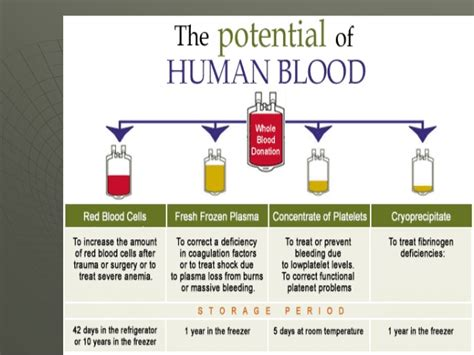 Shelf Of Human Blood by 33 Use Of Blood Products