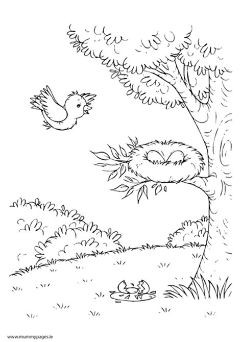coloring pages of birds in trees spring scene with tree and bird s nest colouring