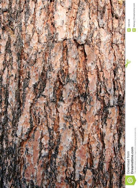 texture pine tree bark royalty free stock image image