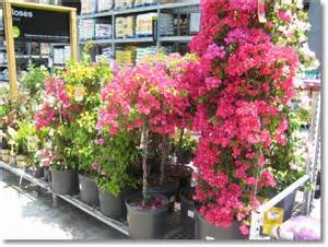 home depot landscape landscaping ideas and inspiration