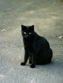 schwarze le datei schwarze katze jpg