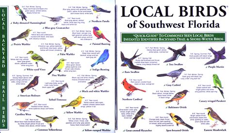 florida backyard birds local birds quick guides to nature science