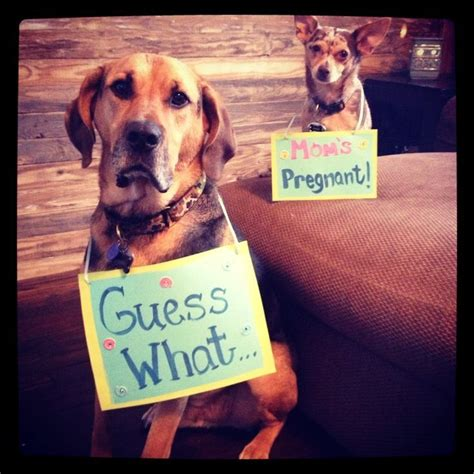 baby announcements with dogs 17 best ideas about baby announcements on creative pregnancy