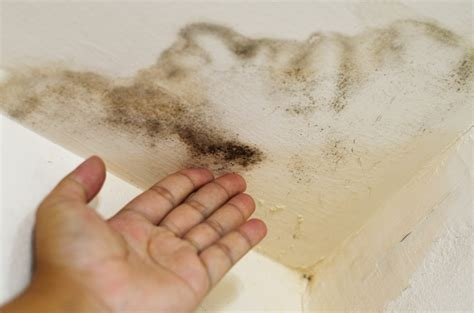 House Smells Musty Do I Mold by What Can Be Done To Repair A Ceiling Stain From A Leaking