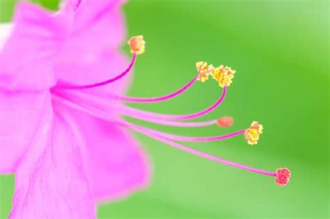 fiore di notte fiori notturni sere d estate tra cactus e gelsomini