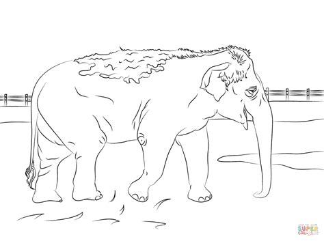 cute indian coloring pages pin kleurplaat kop olifant afb 17981 on pinterest
