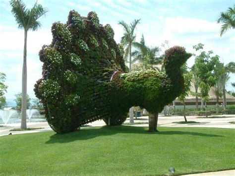 imagenes jardines de mexico pavo real a la entrada picture of jardines de mexico