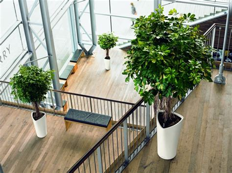 best inside plants choosing the best indoor plants for your home or office