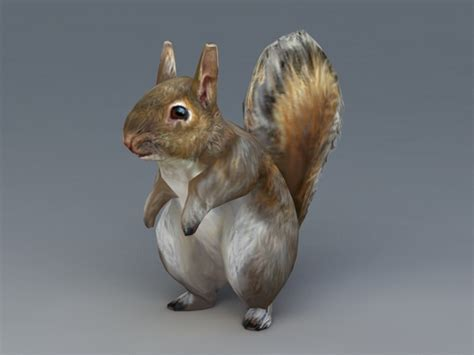 Grey Squirrel 3d model 3ds Max files free download