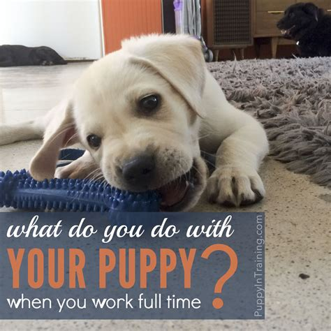 how to potty a puppy when you work what do you do with your puppy when you work time puppy in