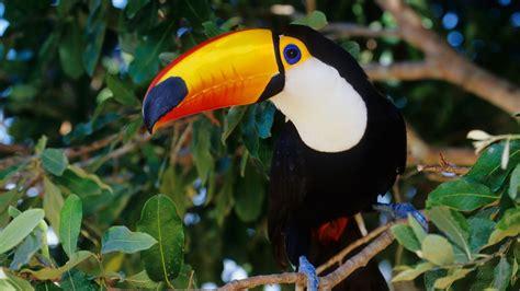 Beautiful Bedroom Ideas by Pantanal Wetlands Brazil The Largest Freshwater Wetland