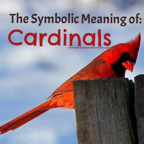 Spirits Of Loved Ones In House by Signs From Spirit Does Visit Me As A Cardinal