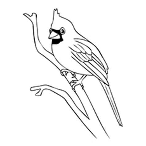 doctor bird coloring page doctor bird coloring download doctor bird coloring
